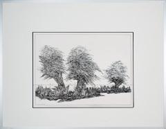3 Knotwilgen in 't Gein Abcoude. tekenpen o.i. inkt afm. 50x65 cm.